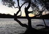 Wooli Wooli River Estuary Processes Study, Estuary Management Study and Plan
