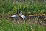 Tootgarook Wetland Ramsar Nomination Feasibility Study